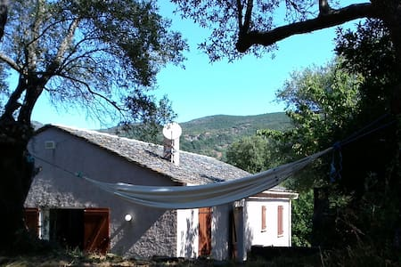 Quiet house surrounded by olive trees and maquis