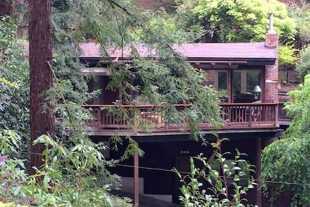 Rest Easy Under Coastal Redwoods