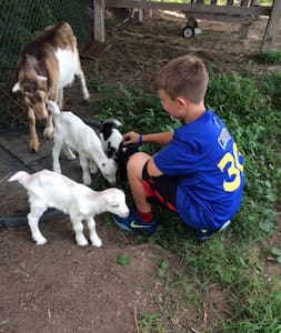 Bluberry Goat Haven Wagonwheel Room - Bluefield - Casa