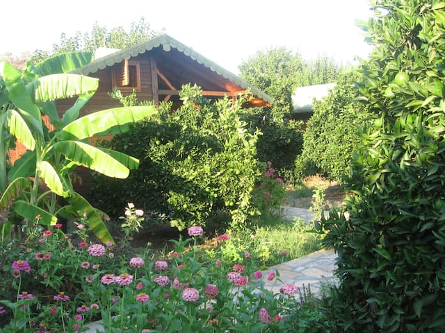wooden bungalows in the orange grov - Çıralı - Pousada
