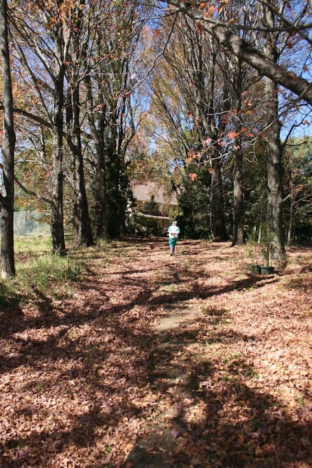 The short Autumn walk down to our conference centre (available on request).