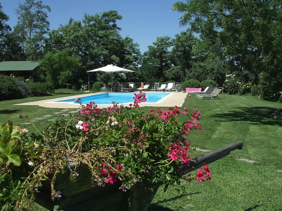 Swimming Pool in the middle of a beautiful garden with flowers and plants