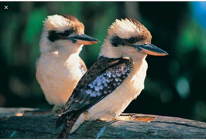 Kookaburras Rest