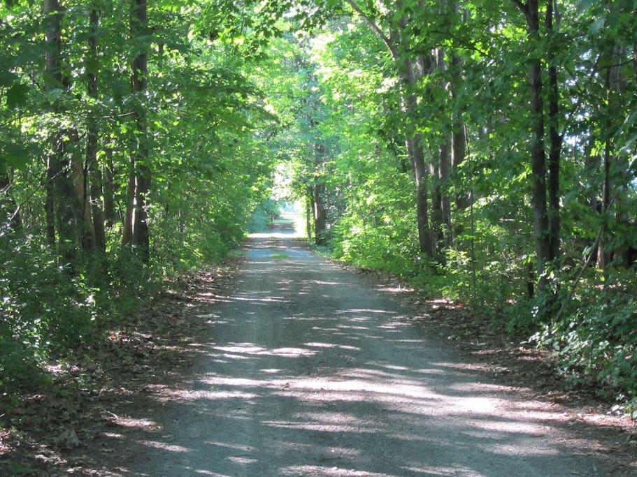 Treed lane way to farm house.
