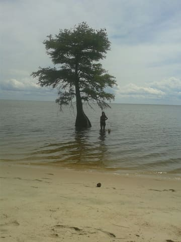 "We call this ""Paradise Beach"". A mile long undeveloped beach bordered by forest. Just a short paddle up the shoreline ."