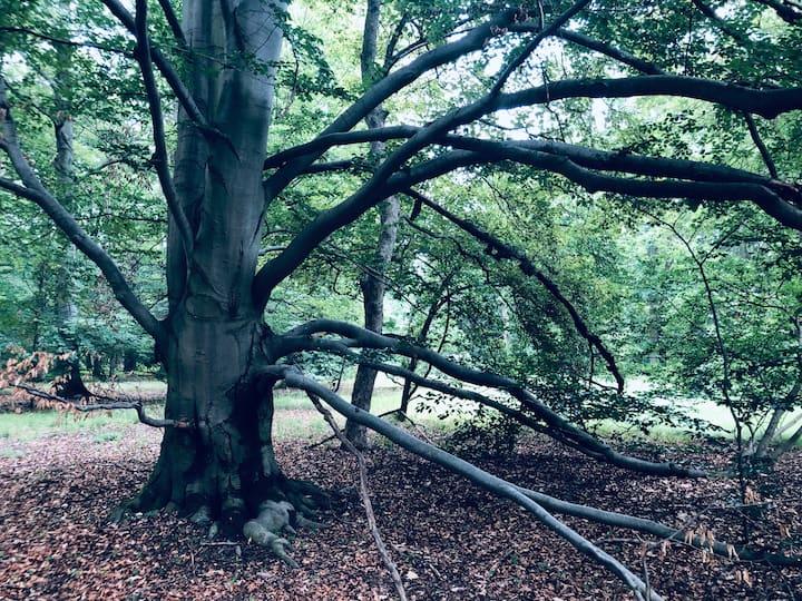 Mistery tree