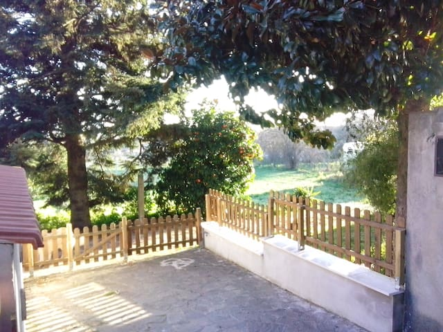 tra pini secolari - Marino - Villa