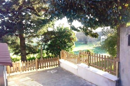 tra pini secolari - Marino