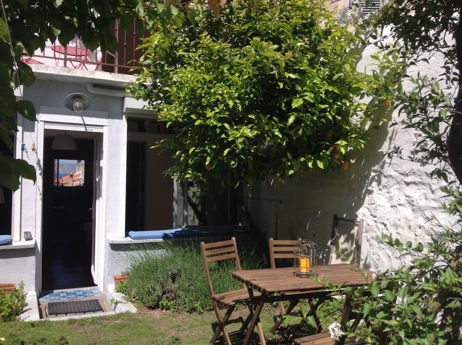 Le jardin et son citronnier (barbecue Weber à votre disposition)