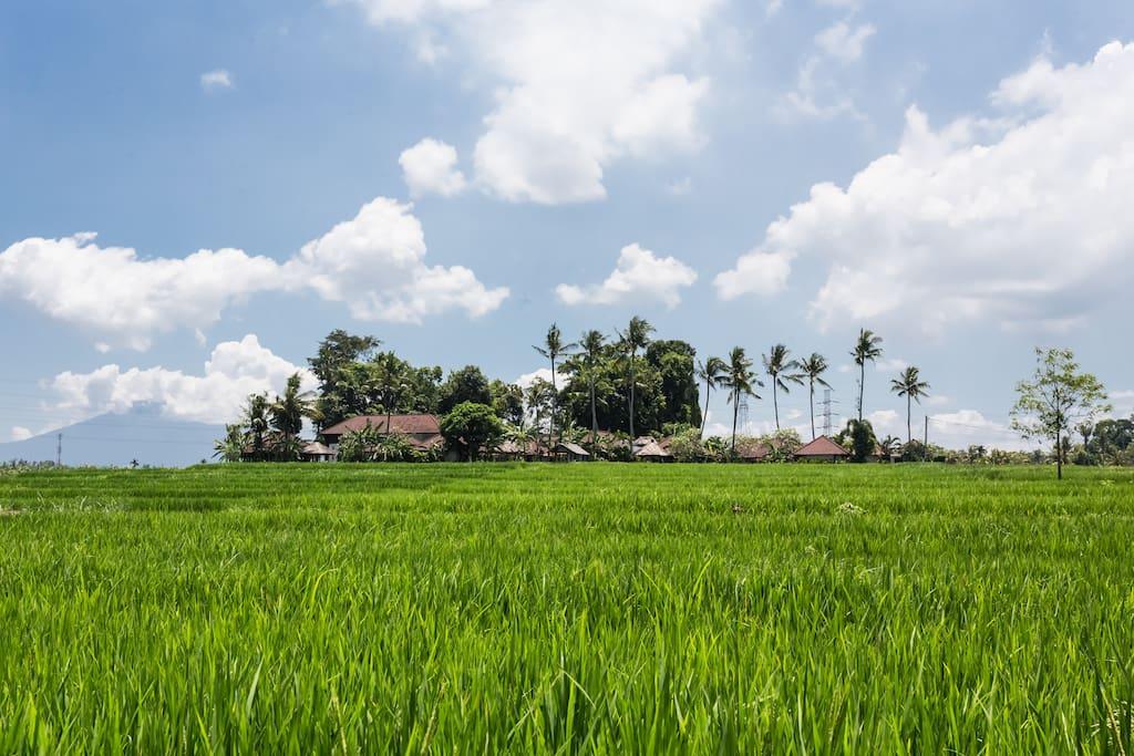 Villa Kaba Kaba complex set amongst the rice fields.