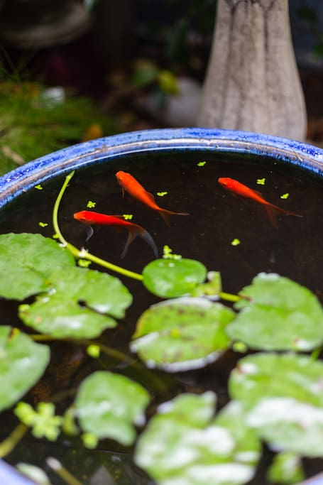 Our fish pond.
