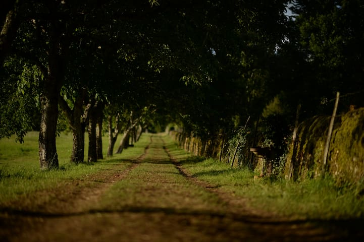 A walnut avenue leads to Les Bories, we encourage guests to enjoy the walk to their accommodation for maximum tranquility.