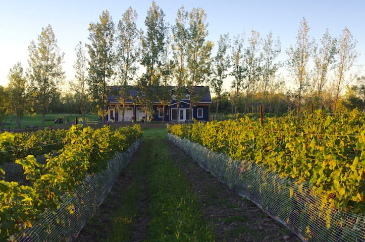 A Vineyard Cottage at Broken Stone Winery - Hillier - Srub