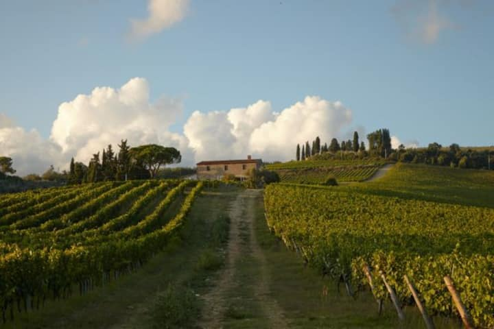 Countrychic house with 360° vineyards view