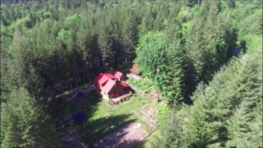 Perfect Packwood Cabin