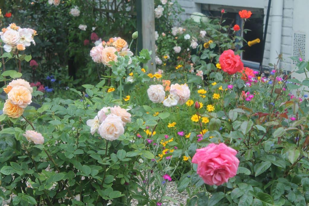 onze rozentuin//notre roseraie  avec terrasse