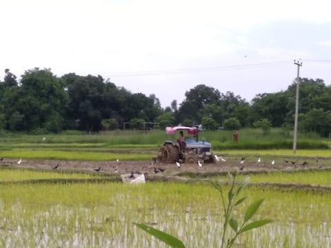 Piruza Farms