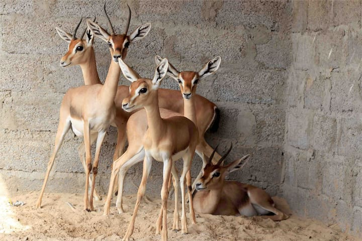 ُThe Deer House