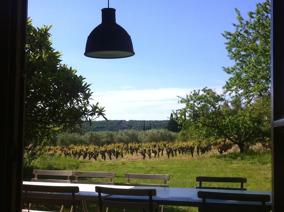 vue de la terrasse, vers vigne et oliveraie