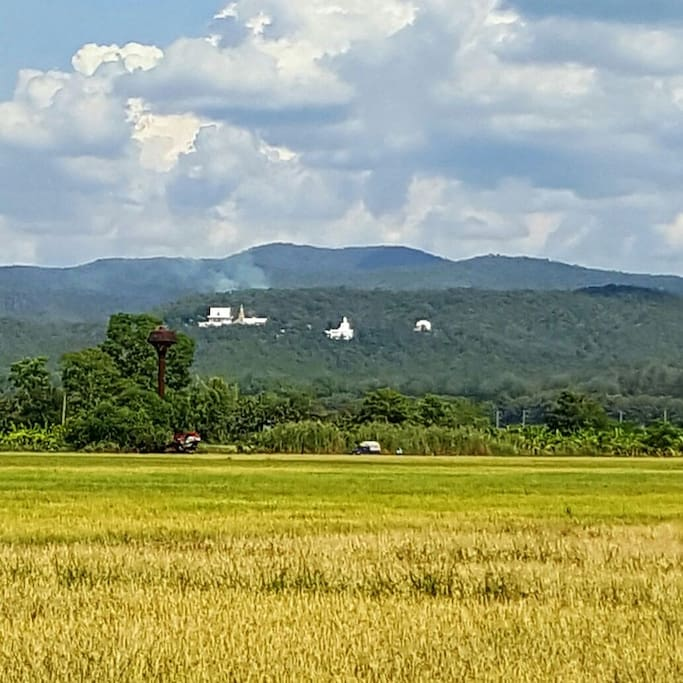 Located here, at the foot of a hilly range, we are right in front of the giant sitting Buddha (seen here in the centre of 3 white structures)