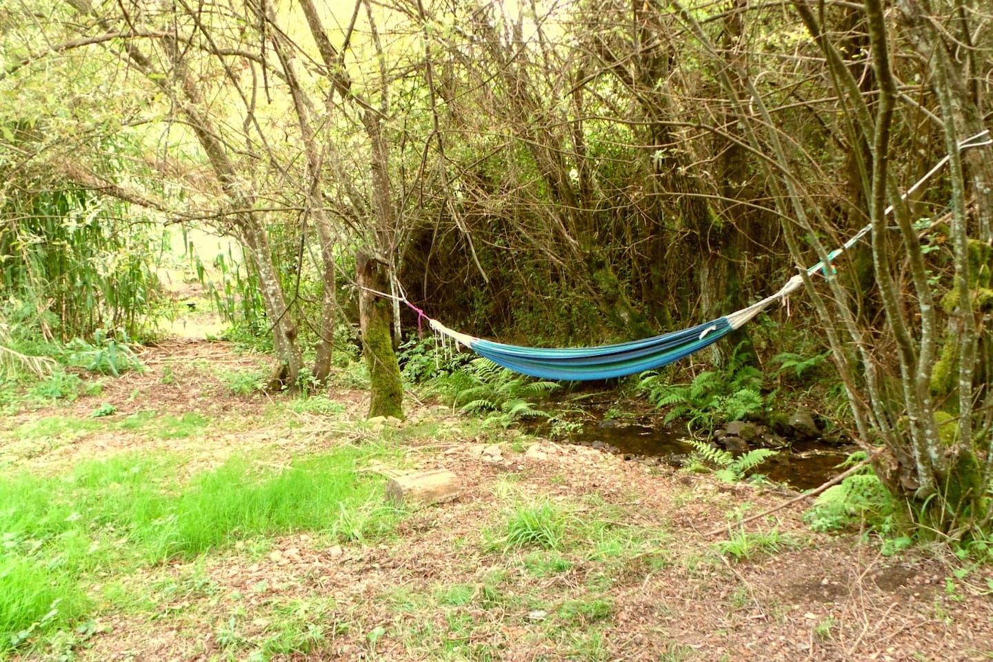 Hammocks on the side of the stream, on the campsite