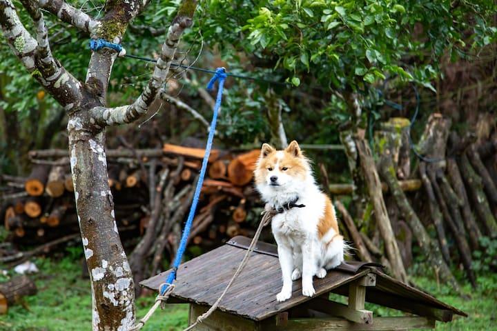 愛犬のくまごろう。とても愛想がよく、優しい小型犬です。広いお庭の隅に繋いであるので犬が苦手な方も安心です。