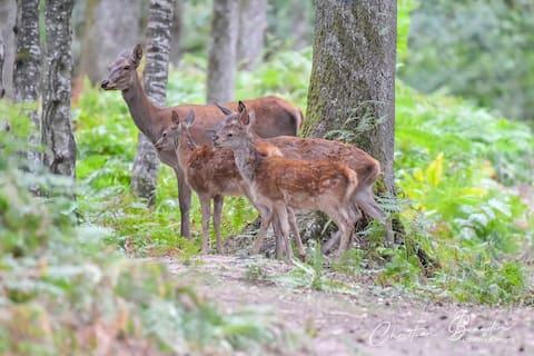 Au cœur de la forêt sauvage de Boutissaint