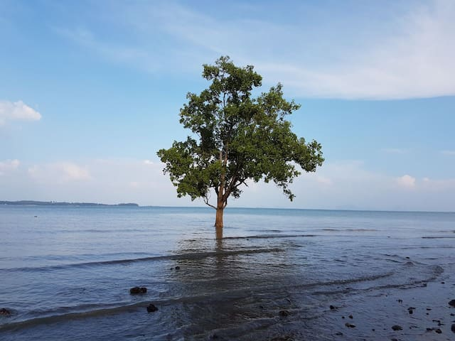 Tree in the Sea 3