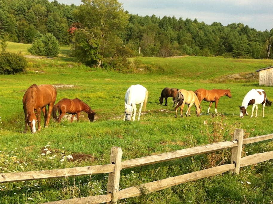 Our horse herd