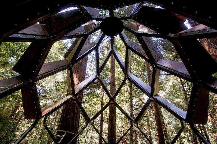 Cathedral ceiling of the treehouse interior.