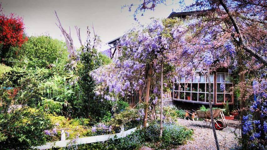 Portal de flores wisteria.