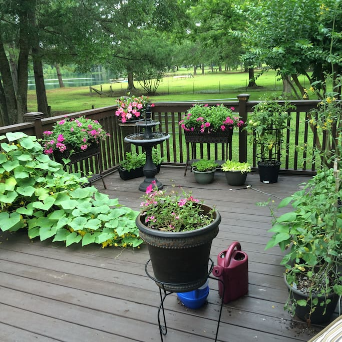 Deck garden with fountain