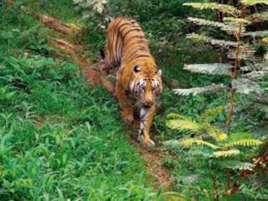 Tiger Reserve Park