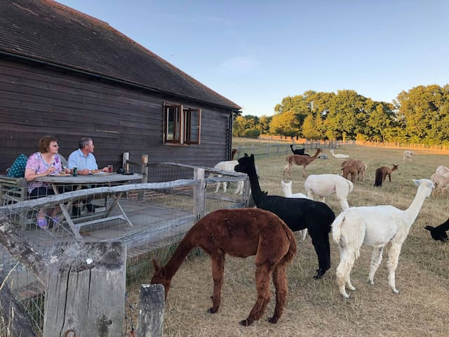 The Lodge at Spring Farm Alpacas