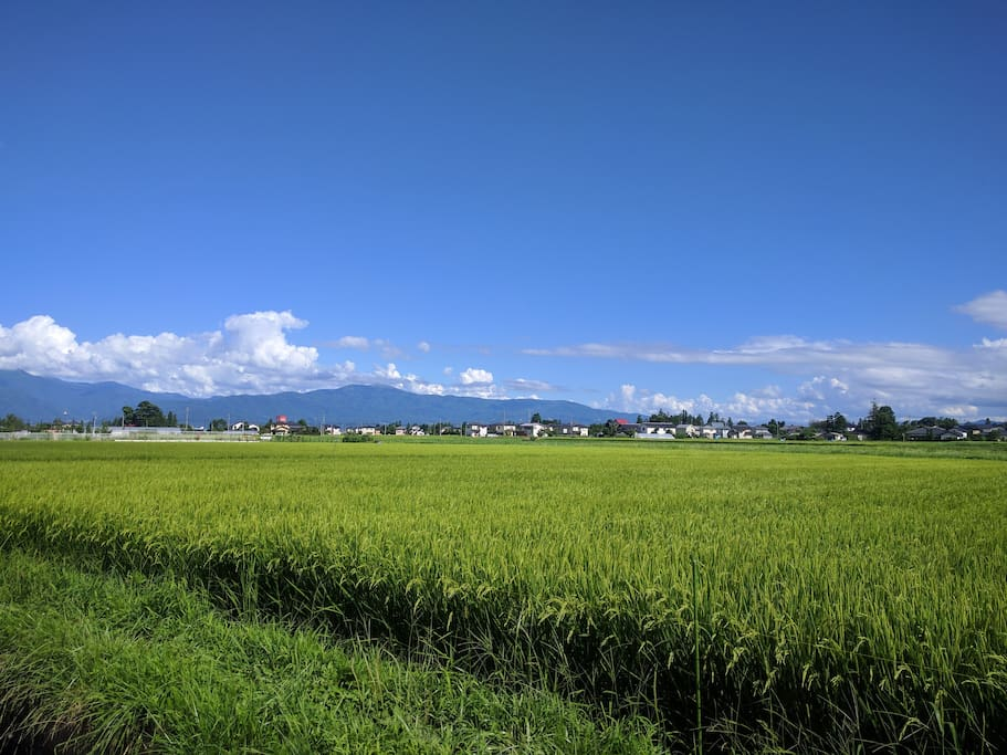 View from my garden. Rice field and river. 庭の横には水路と田んぼ。水音が心地よいです。