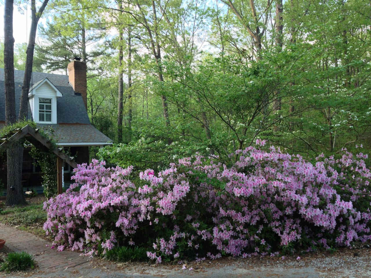 Azaleas blooming in the Spring.