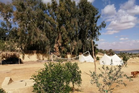 Tunis Tone at Tunis Village (Tents & Rooms)
