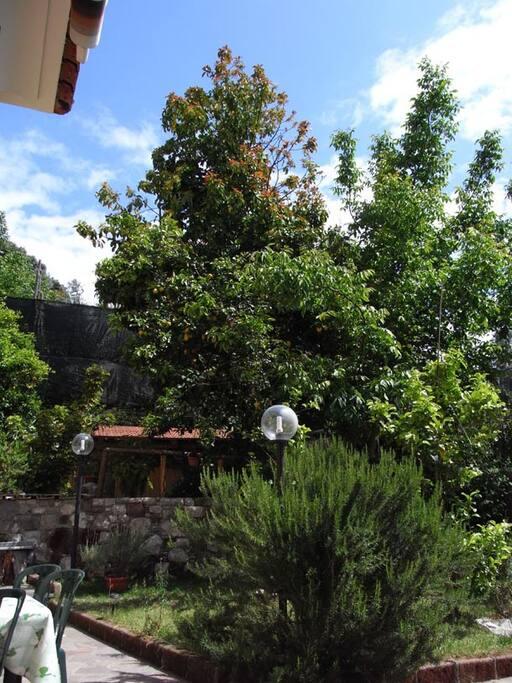 Una vista degli alberi in giardino