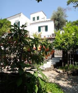 Exclusive Villa apartment-3 Ischia - Barano d'Ischia - 公寓