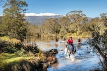 Venture out horse riding in the Snowy Mountains