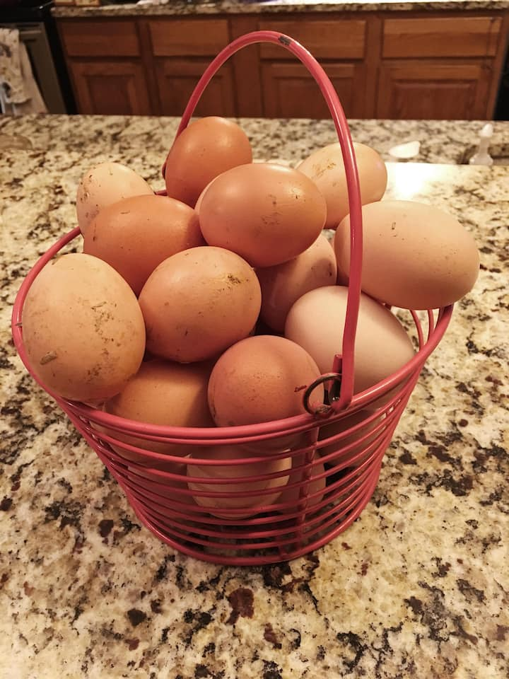 Collect eggs from the coop.