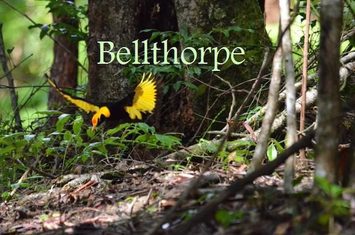 Bellthorpe Stays: Natures Retreat - Bellthorpe - Kabin