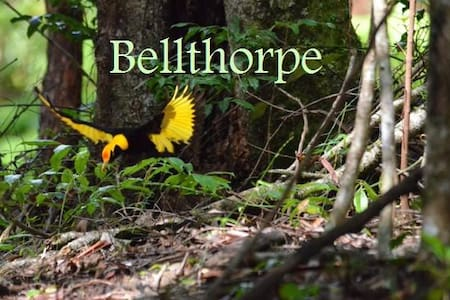 Bellthorpe Stays: Natures Retreat - Bellthorpe - Cabana