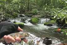 Native trout fishing.  Check NC licensing requirements pls.