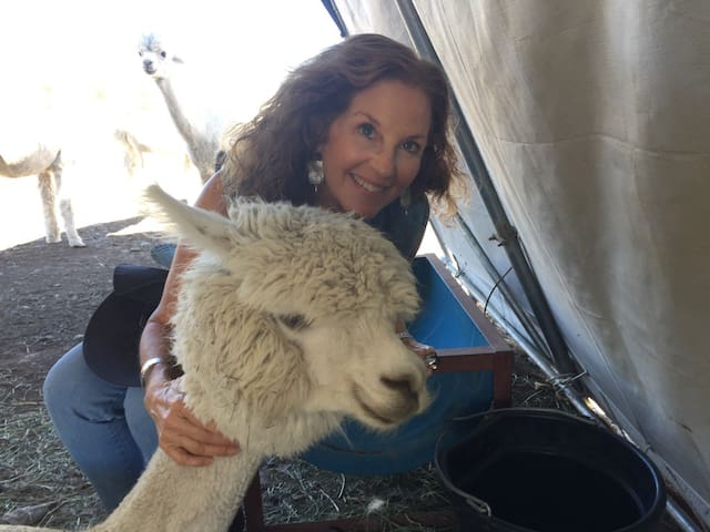 Share a moment with a sweet Alpaca ... ask Laila to arrange a meeting!
