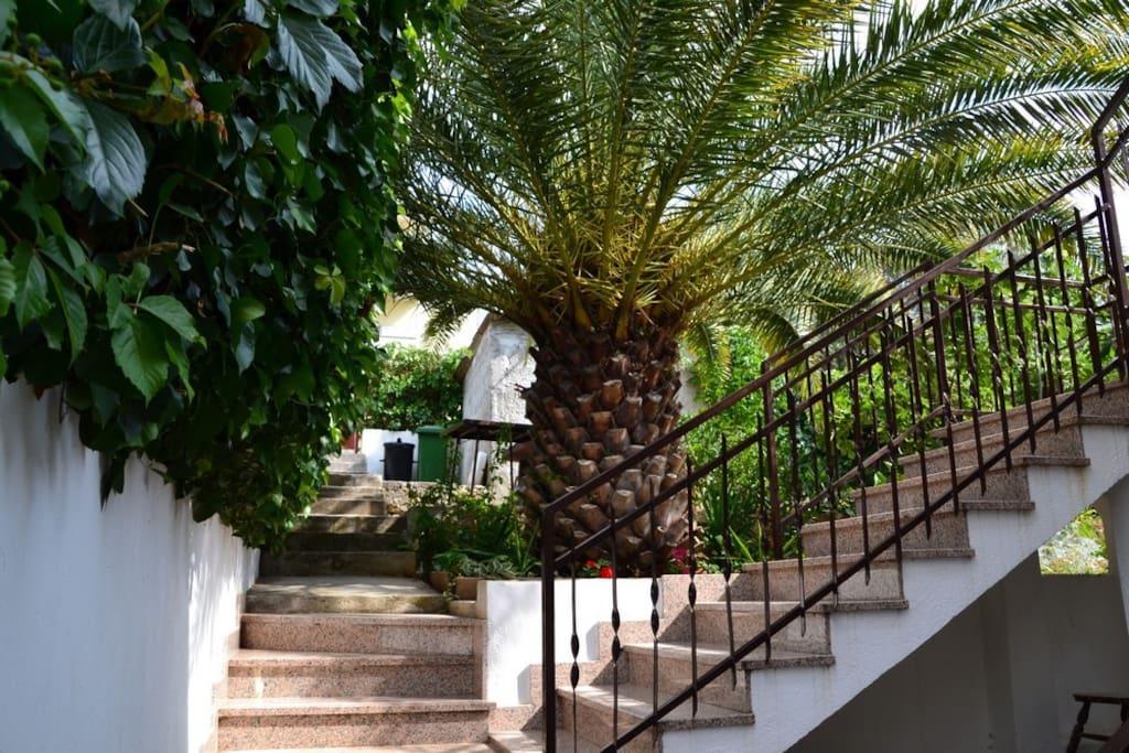 Apartments Nena garden