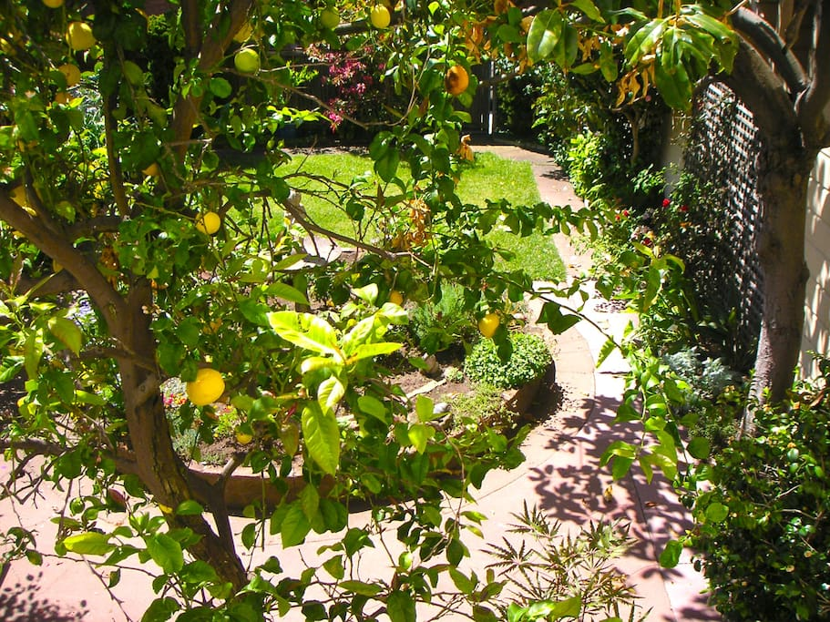 view from master bedroom - yes, those are lemons!