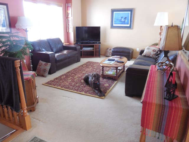Our living room, with our well-mannered pup.