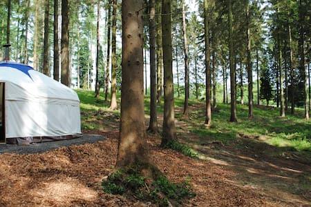 Woodland Yurt - Silligrove Farm - Far Forest
