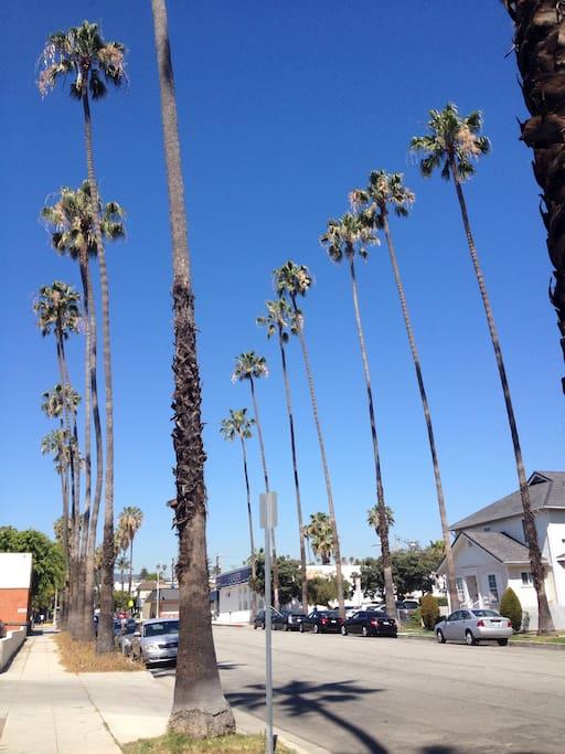 Palm tree lined street.